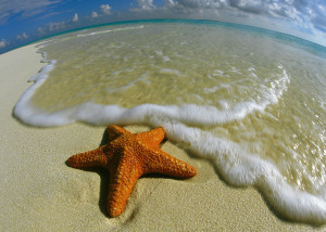 The Starfish Story Rwc Llc